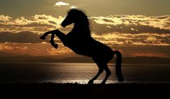 Araberpferd im Sonnenuntergang